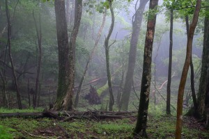 Nikon Digital Camera 雨の原生林=あめのげんせいりん=Rain Forest ※木が倒れている辺りは、すこし谷になっている様子でした☆ 水が集まって流れてくる場所だからか、その窪みに沿って木々が倒れていました