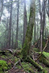 Nikon Digital Camera 苔むす世界=こけむすせかい=The Mossy World ※管理されていない手つかずの森 当然ながら、木は枝打ちなどされていない、まさに、ありのままの姿