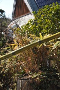 Nikon Digital Camera D700 和風植物と和風家屋 ※竹の手すりにクマザサにススキに椿、さらに梅や松など和の趣でいっぱいになっておりました☆
