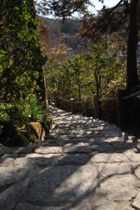 Nikon Digital Camera D700 石段と椿の壁☆