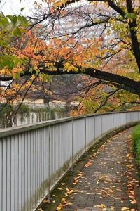 余談ですが・・・ 都会で紅葉が鮮やかに感じないのは、 ①路面からの照り返しなどのヒートアイランド現象で、気温差が少ない ②遠くが見通せるほど空気が澄んでいる=乾燥している=紅葉する葉にはよろしくない ③排気ガス、ホコリ、ビル影などの人工物などで日照に影響がある ・・・などが考えられます。 川沿いの紅葉が美しく見えるのは、3大条件に当てはまる部分が大きいからなのでしょうね、きっと(^^) 都会のオアシスで深呼吸しておきます☆