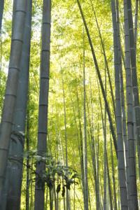 Nikon Digital Camera 冬の竹林=ふゆのちくりん