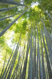 Nikon Digital Camera 陽だまりの竹林=ひだまりのちくりん