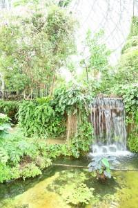 Nikon Digital Camera  温室の植物たち