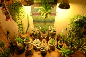 Nikon Digital Camera 多肉植物のディスプレイ ※雑貨屋さんの植物販売コーナーです☆ 店内のあまり明るくない場所に電灯で照らされていると、不思議な魅力を感じます♪ 植物も良いですね~(^^)/
