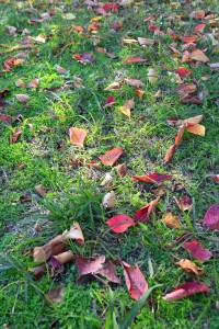 Nikon Digital Camera 落ち葉と晩秋の陽だまり=おちばとばんしゅうのひだまり