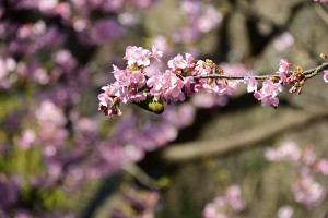Nikon Digital Camera 目白と蜜=めじろとみつ ※スズメよりも小さいといわれるメジロです☆ 花の蜜をたいへん好みます。にぎやかな鳴き声が静かな畑に響き渡っていました♪