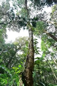 Nikon Digital Camera ビロウヤシの大木 ※幹の根元と頂上の太さが同じなのが面白いです☆ 樹齢は100超えだそうです(^^;