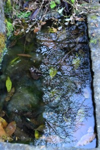 Nikon Digital Camera 冬の樹影=ふゆのじゅえい