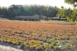 Nikon Digital Camera D700 春野菜