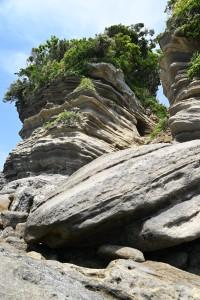 Nikon Digital Camera  初夏の植物と侵食岩