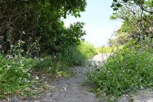 Nikon Digital Camera 海辺の植物と小径=うみべのしょくぶつとこみち