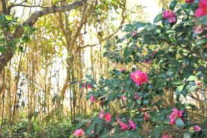 Nikon Digital Camera D700 椿と竹林