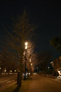 Nikon Digital Camera 冬の夜の銀杏並木=ふゆのよるのいちょうなみき