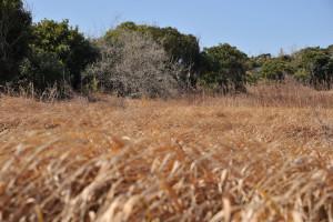 Nikon Digital Camera D700 冬枯れの野原