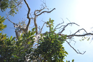 Nikon Digital Camera D700 常緑樹と芽ぶき前の木