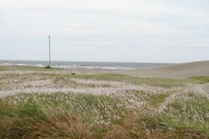 Nikon Digital Camera  チガヤ咲く梅雨の砂浜