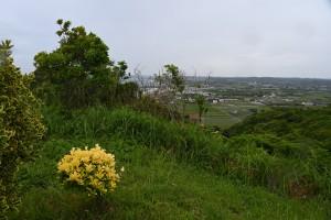Nikon Digital Camera  梅雨にぬれる高台のマサキ ※画面左の黄色い葉の樹木の2株です☆ ニシキギ科ニシキギ属の常緑樹。 丈夫で育てやすく、剪定にも強いので生垣などの植栽に多用されている樹木です♪