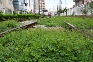 Nikon Digital Camera 雑草化するノウゼンカズラと都電 ※ノウゼンカズラ科ノウゼンカズラ属のつる植物☆ 大変丈夫で暑さ寒さ繁殖力に強いです。 日本に渡来したのは千年以上も前の大先輩です(^^;
