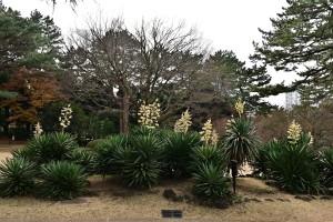 Nikon Digital Camera 花咲くアツバキミガヨラン