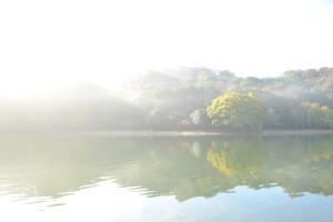 Nikon Digital Camera D700 朝靄の晩秋=あさもやのばんしゅう