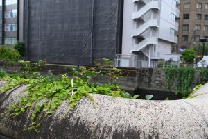 Nikon Digital Camera 大都会のナツヅタ