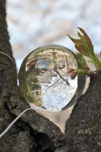 Nikon Digital Camera 開花宣言の標準木=かいかせんげんのひょうじゅんぼく ※靖国神社の開花宣言の標準木です☆