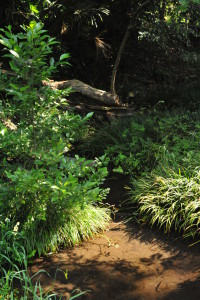 Nikon Digital Camera D700 森の小沼=もりのこぬま