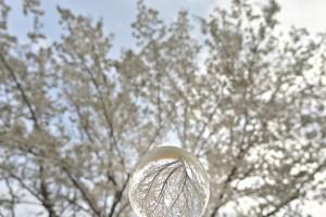 Nikon Digital Camera 水晶の中の桜=すいしょうのなかのさくら