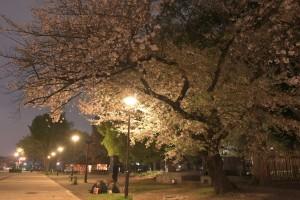 Nikon Digital Camera 夜桜=よざくら
