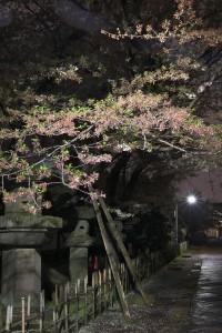 Nikon Digital Camera 葉桜への移ろい=はざくらへのうつろい
