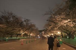Nikon Digital Camera 夜桜見物=よざくらけんぶつ