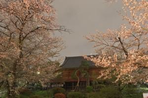 Nikon Digital Camera 寺院と桜=じいんとさくら