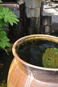 Nikon Digital Camera D700 水甕&苔とヤツデの葉=みずがめとこけとやつでのは