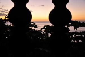 Nikon Digital Camera D700 東雲時の植物と空