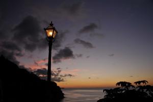 Nikon Digital Camera D700 東雲の植物と街燈=しののめのしょくぶつとがいとう