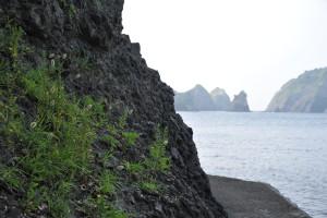 Nikon Digital Camera D700 浜狗尾草=はまえのころぐさ ※沿岸に自生するエノコログサの仲間です。背が低くてはいつくばるようにして生えているタイプ~画面左側のように背の高い変種までバリエーション豊富だそうです(^^)