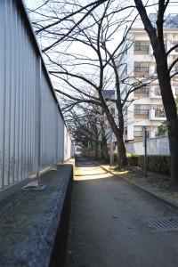 Nikon Digital Camera D700 芽吹き前の桜木