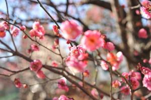 Nikon Digital Camera D700 梅の花
