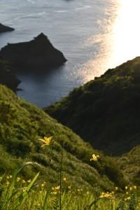 Nikon Digital Camera 岬の夕菅=みさきのゆうすげ