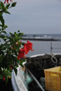 Nikon Digital Camera D700 晩夏のハイビスカスと漁港