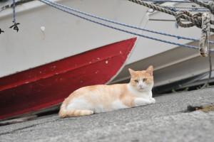 Nikon Digital Camera D700 漁港のネコちゃん☆