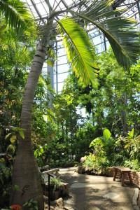Nikon Digital Camera D700 トックリヤシと実 ※画面左側の根元がぷっくりと膨らんだヤシがトックリヤシです。幹の上のほうにお花が咲いたあとにできる実がついているのが見えます☆ 植物のカラダが大きくなると葉もまた立派になって見ごたえがありますね~♪素敵(^^)