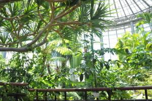 ビヨウタコノキの枝☆ 枝分かれも非常に素敵な雰囲気です~(^^)