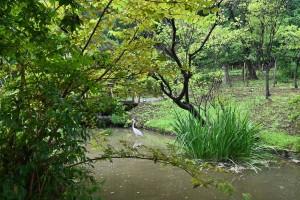 Nikon Digial Camera 晩夏の日本風庭園