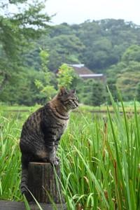 Nikon Digital Camera 晩夏の花菖蒲畑と雨上がりのネコたん☆