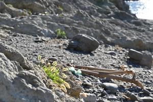 Nikon Digital Camera 輝く浜狗尾草=かがやくはまえのころ ※イネ科エノコログサ属。 海岸の砂丘や砂浜に近い草原、路傍などに生えています☆
