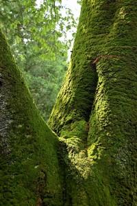 Nikon Digital Camera 苔の世界=こけのせかい=The Moss World みどり色の波長☆ 目からだけでなく、におい、湿度、日陰のひんやり感...etc...、と立体的に体感できるモスワールド♪ そんな苔スポットは意外と身近に存在したりします(^^)
