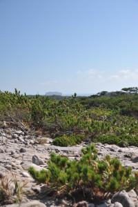 Nikon Digital Camera D700 高台の松林=たかだいのまつばやし ※季節によっては強風が吹き荒れる場所に生えるマツ君たち☆ 老木は見事な感じに曲がり、頂上のほうの松は背がとても低かったです