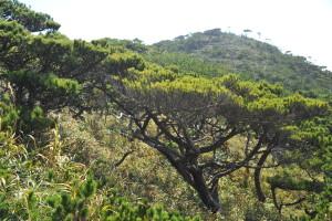 Nikon Digital Camera D700 仲秋の松林=ちゅうしゅうのまつばやし